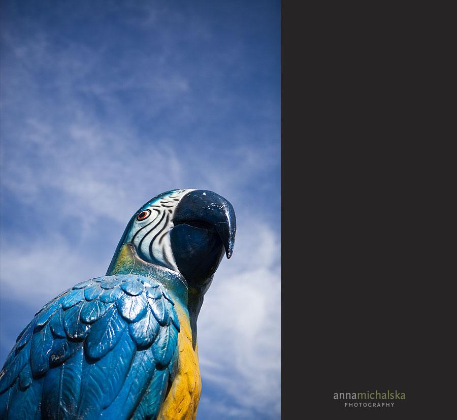 calgary wedding anna michalska photography hawaiian themed parrot