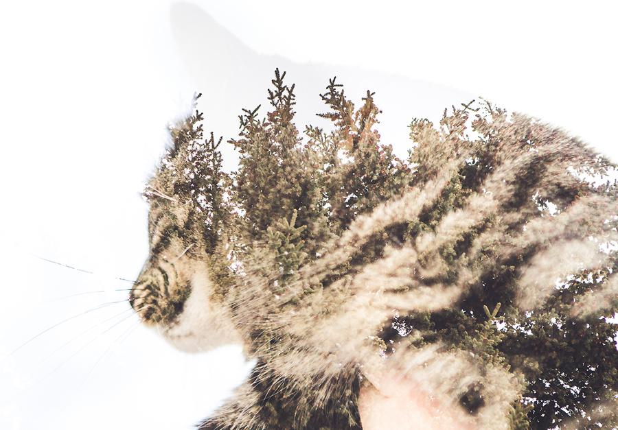 cat photography calgary anna michalska