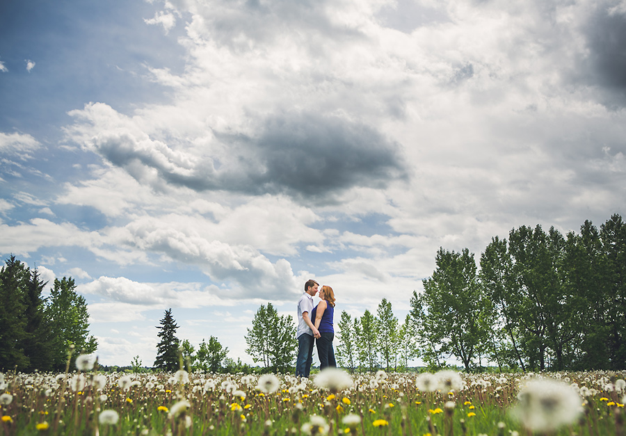 calgary engagement photo dandelions field north glenmore park