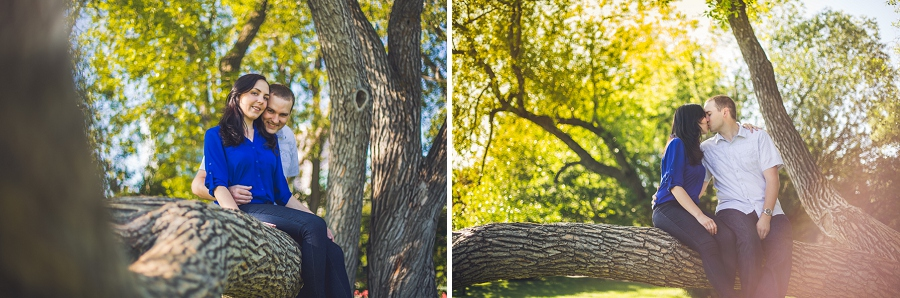 engagement session couple kissing sitting in tree calgary rotary park