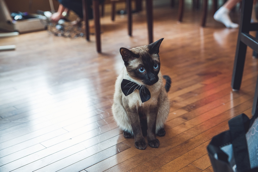 cat with bowtie calgary wedding photographer anna michalska