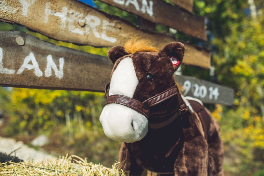 stuffed toy horse cowboy themed wedding calgary wedding photographer anna michalska