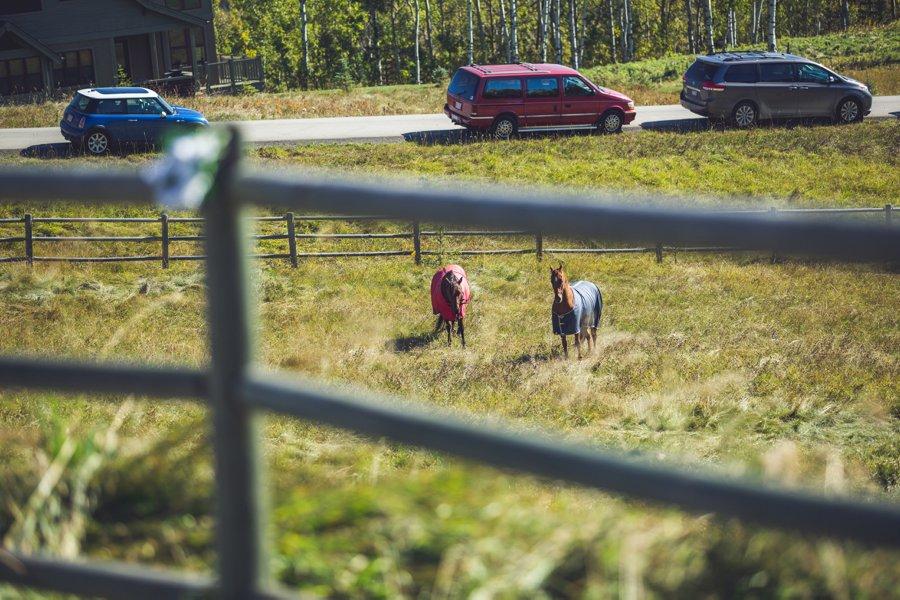 horses cowboy themed wedding calgary wedding photographer anna michalska