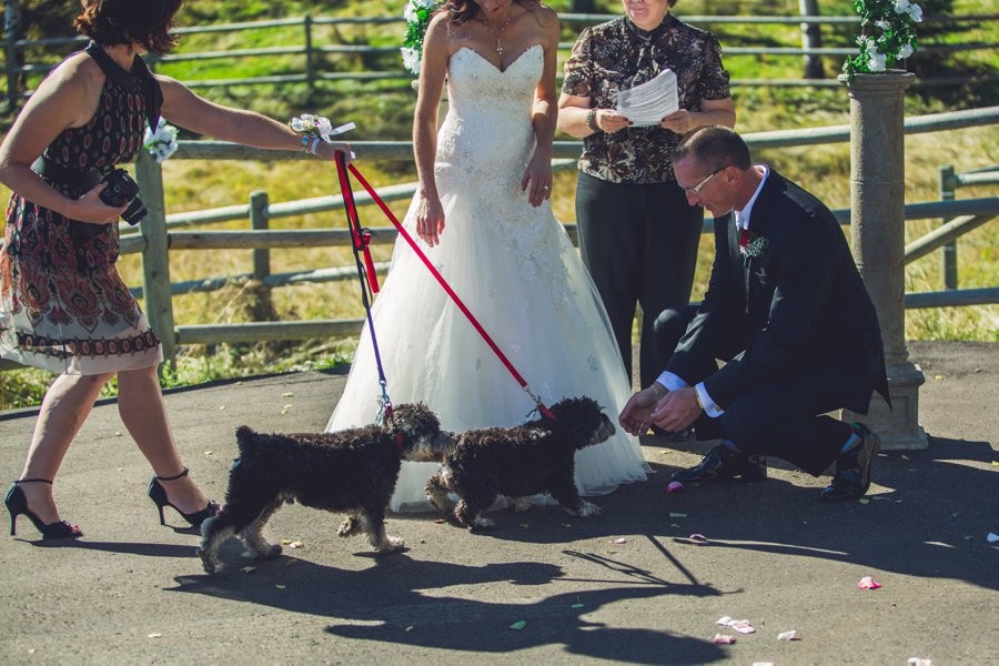 ring bearer dogs calgary wedding photographer anna michalska