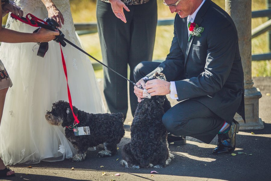 ring bearer puppies calgary wedding photographer anna michalska