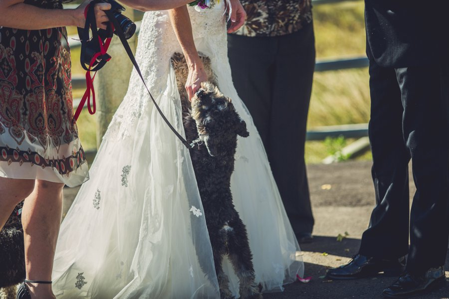 puppy ceremony cowboy themed wedding calgary wedding photographer anna michalska