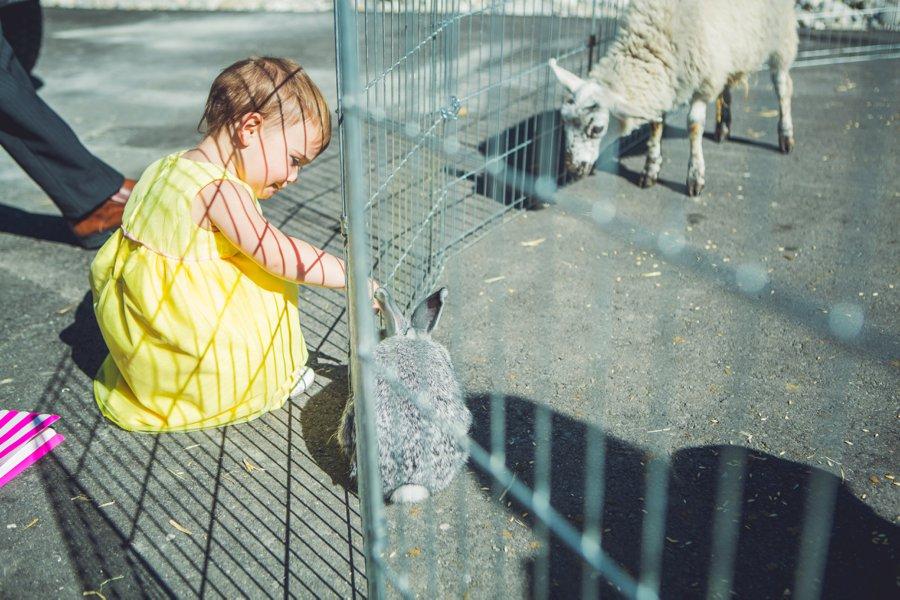 little girl petting bunny cowboy themed wedding calgary wedding photographer anna michalska