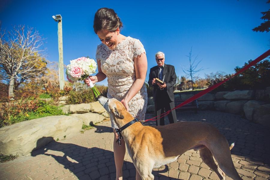 cute greyhound bride calgary wedding photographer anna michalska