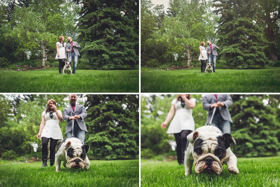 pitbull puppy calgary engagement session