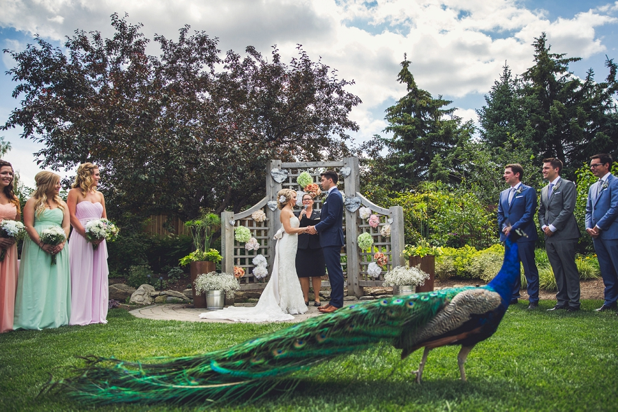 peacock calgary zoo wedding summer