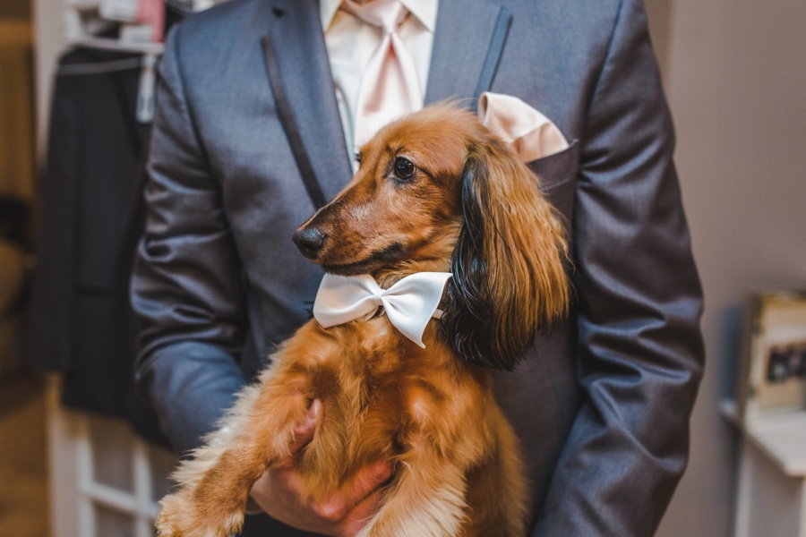 dachshund dog groom wedding calgary