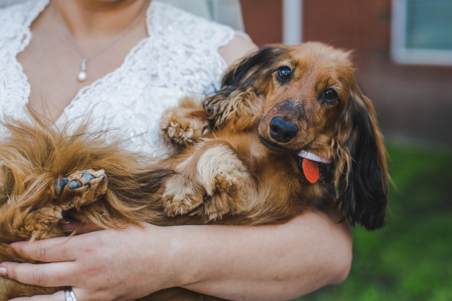 calgary rotary park wedding bride groom dog pet dachshund