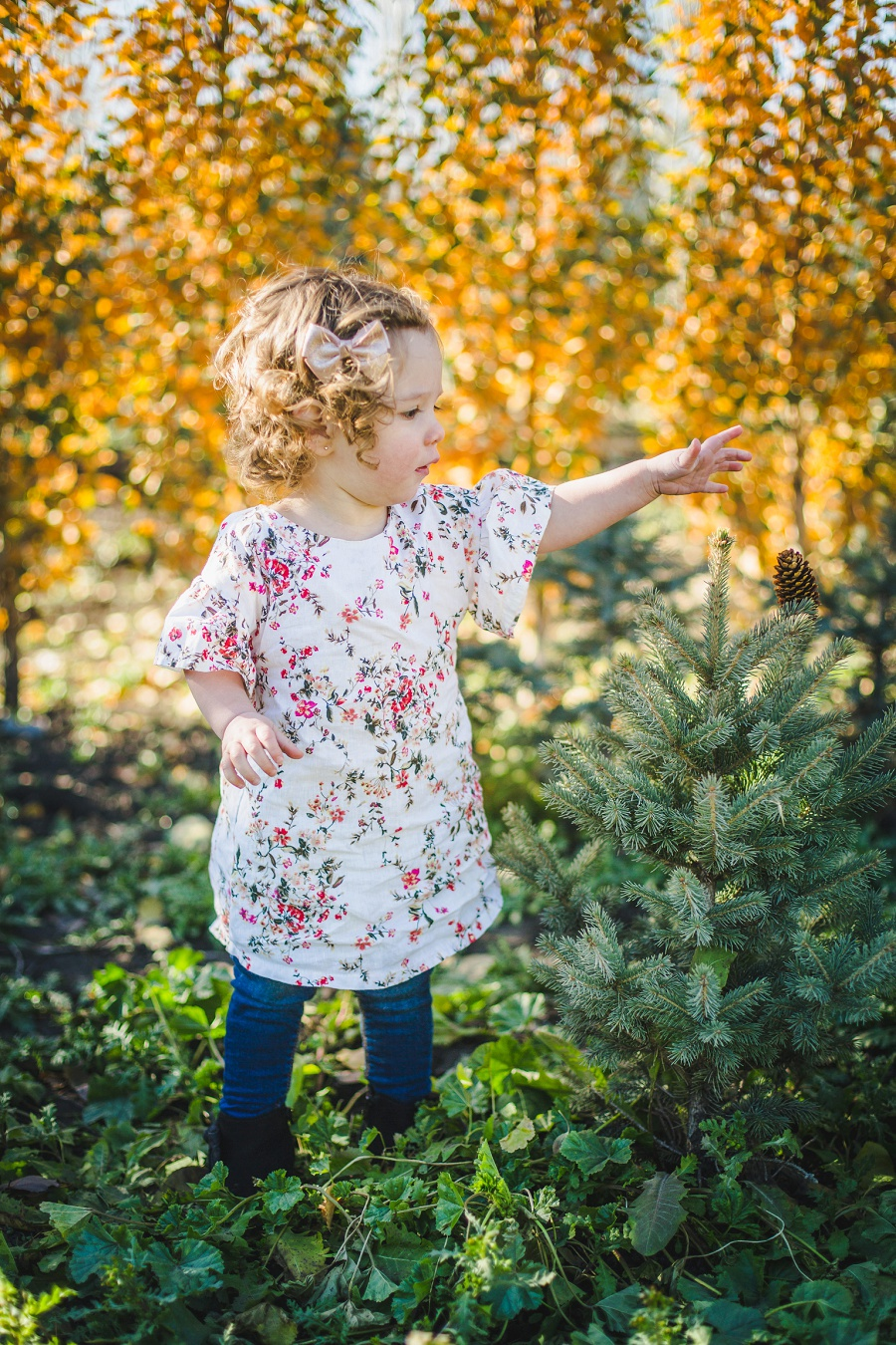 family photos saskatoon farm calgary fall yellow leaves daughter dress